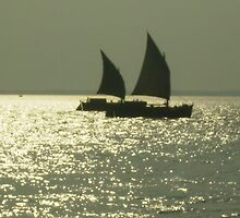 """Paired to sail by """" RiSH """""""