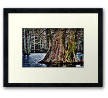 Big Cypress Framed Print