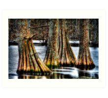 Cypress Quad Art Print