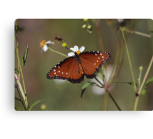 Queen Butterfly Canvas Print