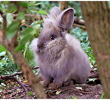 Lion head rabbit Photographic Print