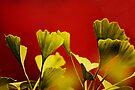 Vivid Ginkgo. by Todd Rollins