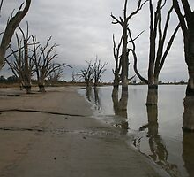 Lake Bonney,Barmera by elphonline