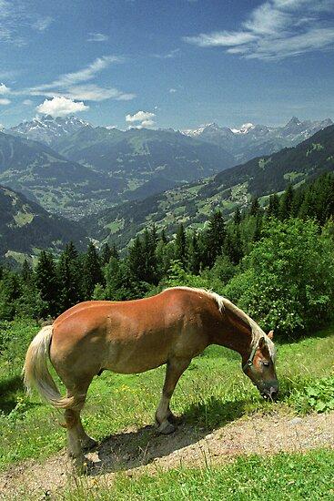 Horse at Kristberg, Austria by Lenka