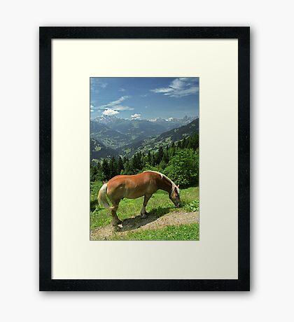 Horse at Kristberg, Austria Framed Print