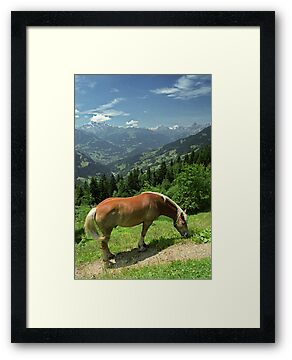Horse at Kristberg, Austria by Lenka