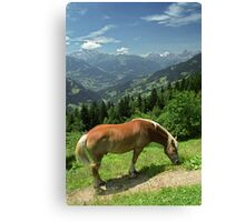 Horse at Kristberg, Austria Canvas Print