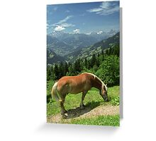Horse at Kristberg, Austria Greeting Card