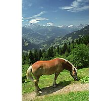 Horse at Kristberg, Austria Photographic Print