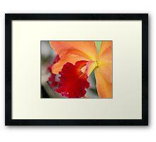 Large Orange Orchid Framed Print