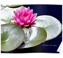 PINK LILY ON A SILVER PAD Poster