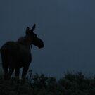 Moose Silhouette by Judson Joyce