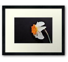 Daffodil Profile Framed Print