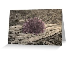 sitting on the straw Greeting Card