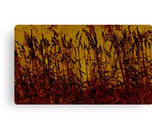 a sunsets tall grass Canvas Print