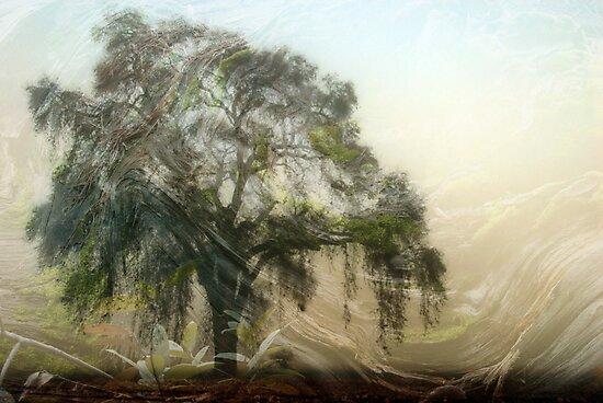 Oak Wood Abstract by bouldercreek