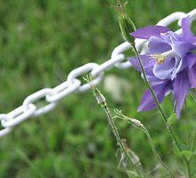 Pretty Purple Flowers by gypsykatz