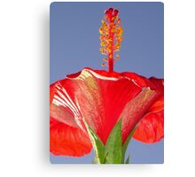 Tropical Red Hibiscus Flower Against Blue Sky Canvas Print