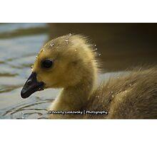 Baby Goose (1) Photographic Print