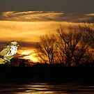Birdseye View by Pat Moore