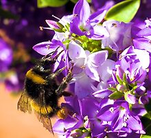 Busy Bee  by yeamanphoto