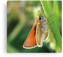 Common Branded Skipper Canvas Print