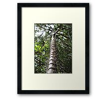 Touch me not! Maliau Basin - Sabah's Lost World Framed Print