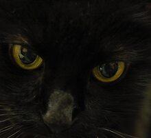 Cat Eyes by Pamela Shane