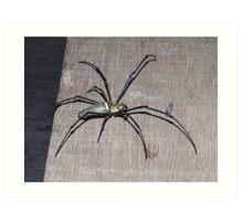 Spider - Borneo Art Print