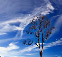 A Lonely Tree by Steven  Siow