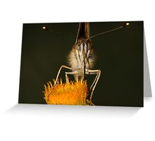 Australian Painted Lady Greeting Card