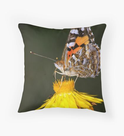 Australian Painted Lady Throw Pillow