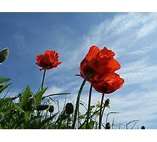 Dune flowers Photographic Print