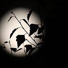 June Moon  by Steiner62