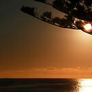 Kaikoura Sunrise by Magee