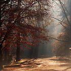 Foggy Autumn by Stephen Norris