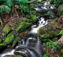 Yarra Ranges Beauty by Alistair Wilson