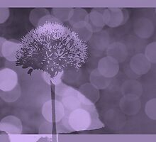 Allium  - JUSTART ©  by JUSTART
