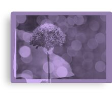 Allium  - JUSTART ©  Canvas Print