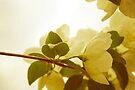 Lightness of Being by sandra arduini