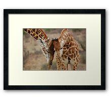 Giraffe greeting Framed Print
