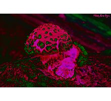 Psychedelic Shroom Photographic Print