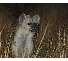 Spotted Hyaena Photographic Print