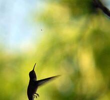 Hummingbird Hunting Gnat by Ryan Houston