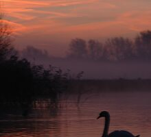 SILOUHETTE OF A SWAN AT DAWN by delros
