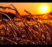Icy HOT by ZenAkita