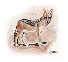 Black back jackal by Grant Slabbert