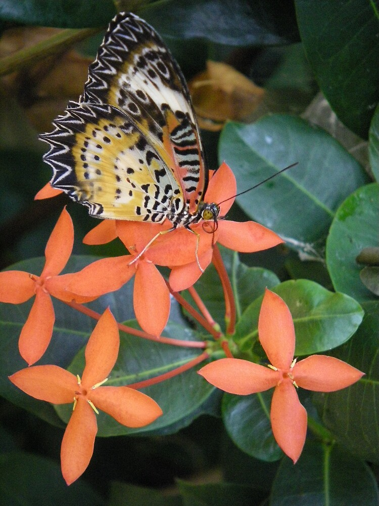 orange butterfly and flower by Sheila McCrea