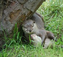 river otters in a playful mood by duckie