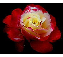 Carol's Rose... Photographic Print
